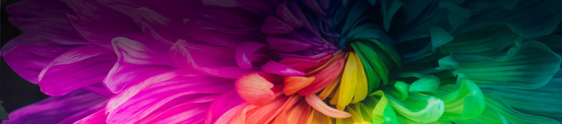 Płatki kwiatów w różnych barwach
