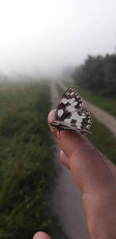 piekno-natury295